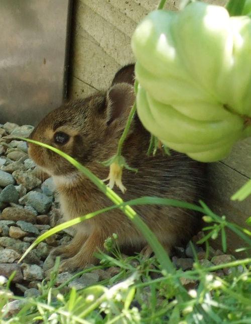 Bunnies2