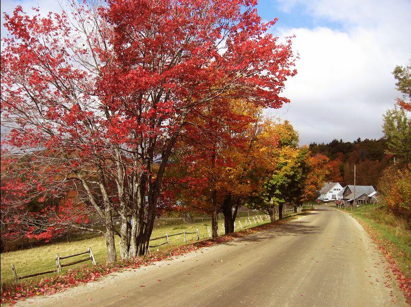 Vermont Foliage Large