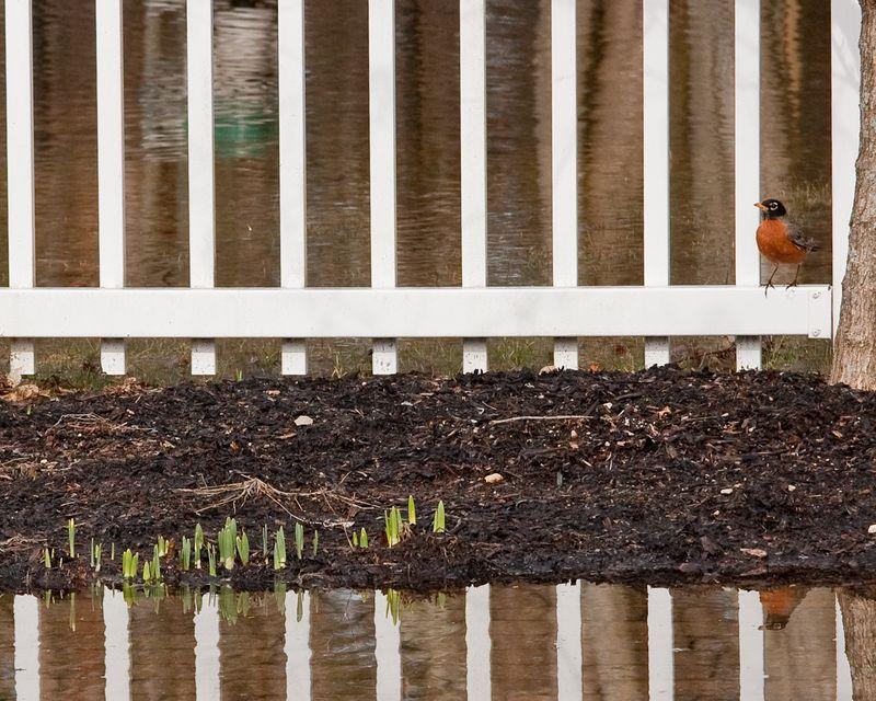 Spring Flood-4