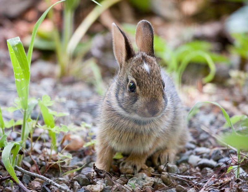 Bunny-3