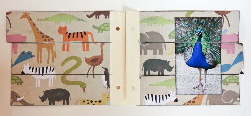 Zoo Album-21