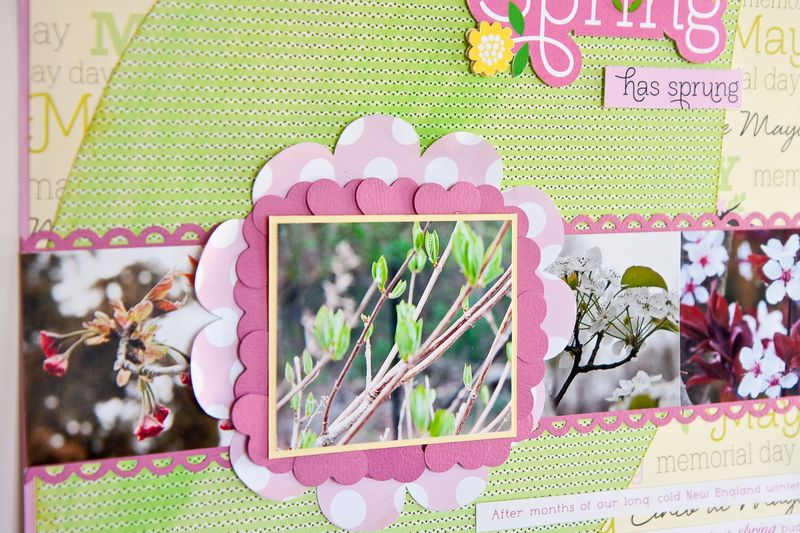 Spring layout-3