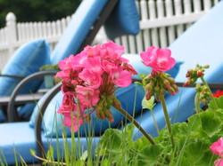Garden_uncle_pat_236